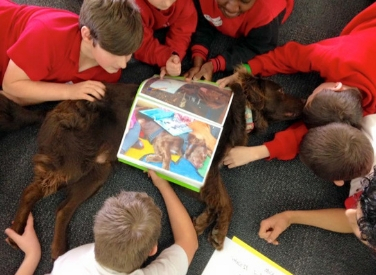 Our Dogs Teaching Communication in Schools